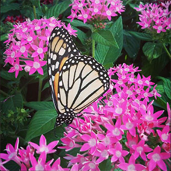 butterfly (transformation through hypnotherapy)